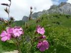 Fleurs d'alpage:Yoga-de-lenergie-et-soins-naturels-d-2