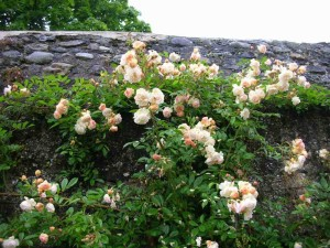 thumb_Roses de printemps_1024